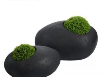 Chậu trồng dành cho cây mọng nước
